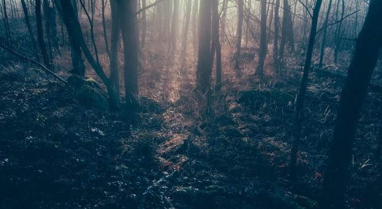 dark-forest-1081991_1920